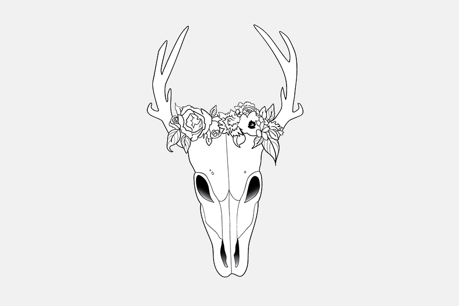 Skull Illustration / Little Bison Studio